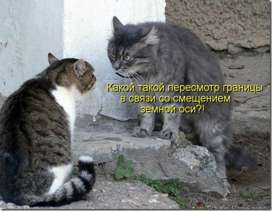 kotomatrix_50