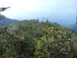 Gunung Pesagi summit ridges (Dan Quinn, October 2012)