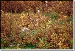 Bradgate Park D50  27-10-2012 13-50-17
