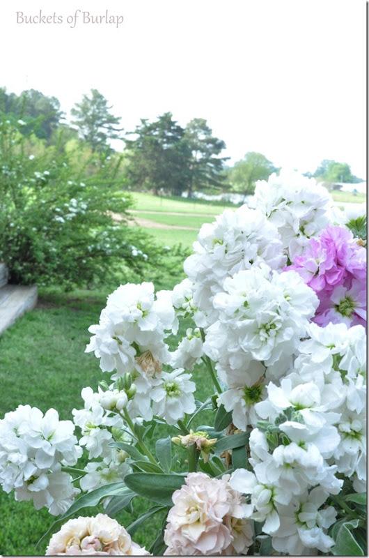 spring garden 2013-6