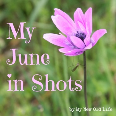 my june in shots