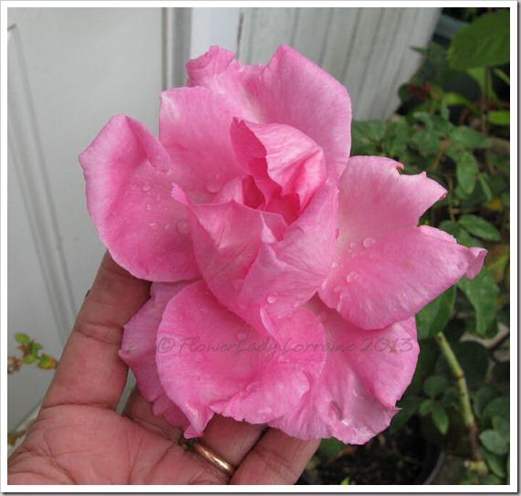 05-01-paul-mc-rose4