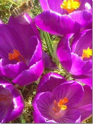 ipad images  10-03-2015 13-32-49