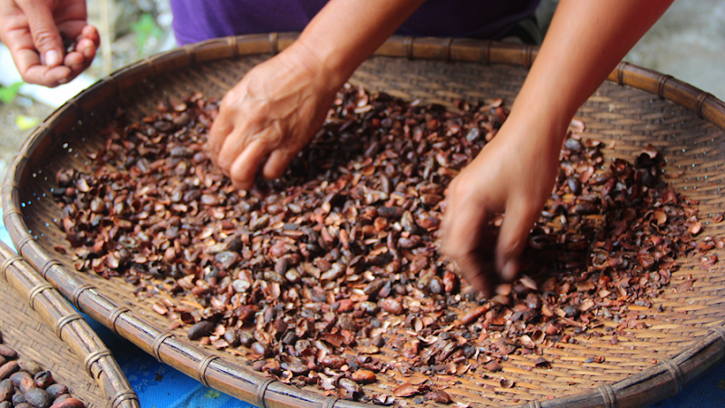 rensa kakao