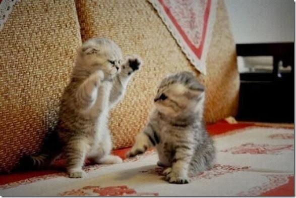 funny-animals-cute-023