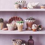 shell flower pots.jpg
