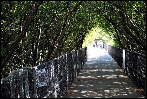 03 - Mangrove Boardwalk
