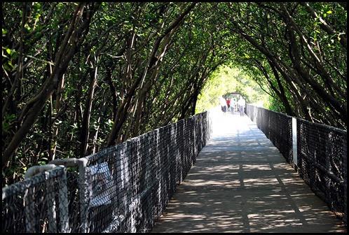 03 - Mangrove Boardwalk