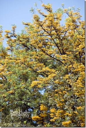 tree-flowers