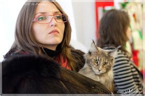 Выставка кошек WCF 23-24 октября 2010г. Санкт-Петербург