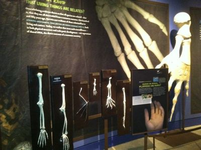 Darwin.exhibit.4.jpg