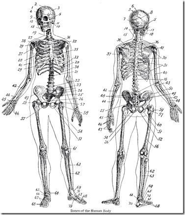 Vintage-Anatomy-Skeleton-Images-GraphicsFairy