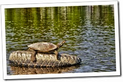 Tortue[1]
