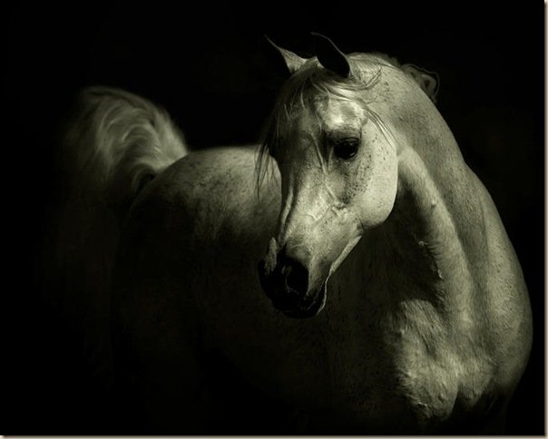 Cheval (8)