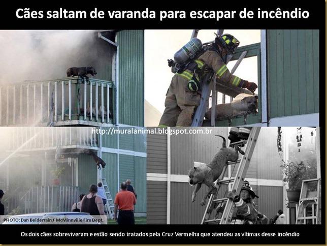 Cães saltam de varanda para escapar de incêndio