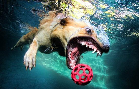 Underwater Dog 05