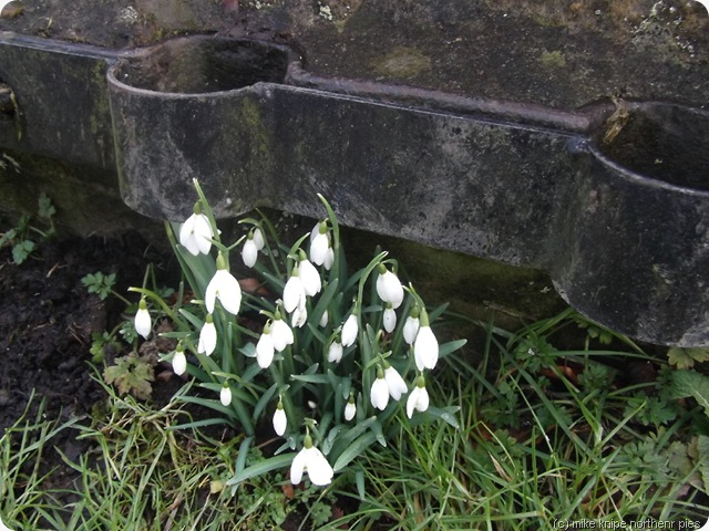 stocks and snowdrops