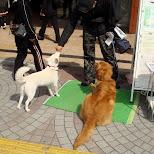 cute dogs at shinjuku station east exit in Mitaka, Tokyo, Japan