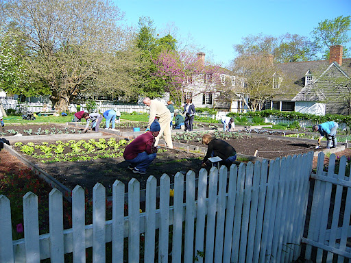 Scores of enthusiastic, dedicated volunteers help to make Williamsburg the special place it is and here is a crew of gardeners out early on a Saturday morning planting veg.