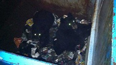 bears-dumpster