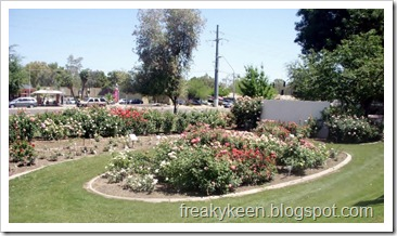 MCC Rose Garden 6