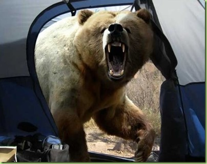 bear_attacks_tent