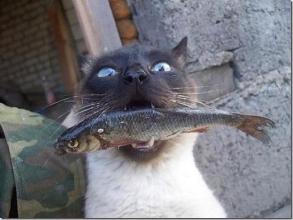 Gatos Felizes (18)