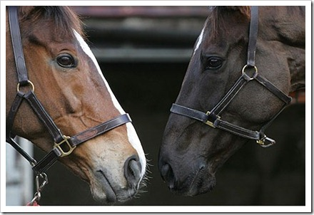 Kauto and Denman photographer unknown