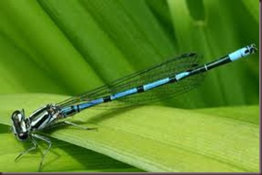Amazing Pictures of Animals, photo Nature, exotic, funny ,incredibel Zoo, Dragonfly, Insecta, Alex (7)