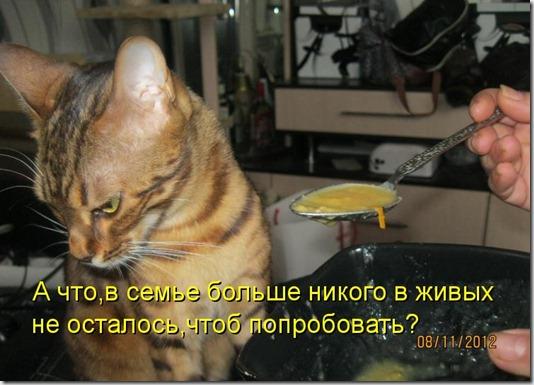 kotomatritsa_u