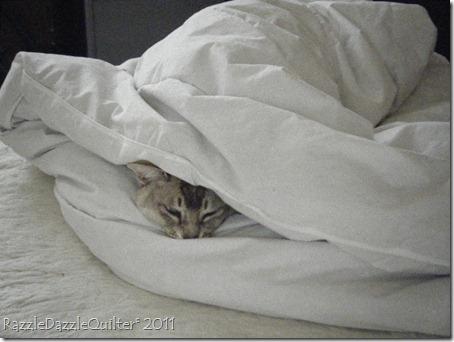 Kaiser Snuggles up