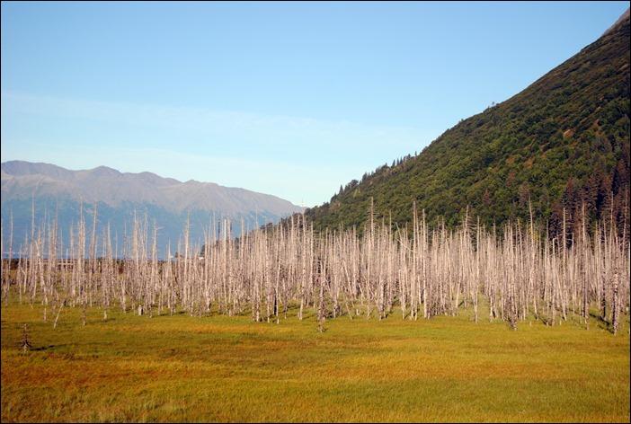 2013_08_Alaska 034