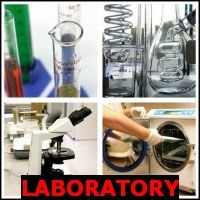 LABORATORY- Whats The Word Answers