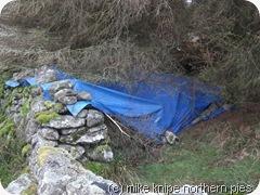 dofe tarp shelter