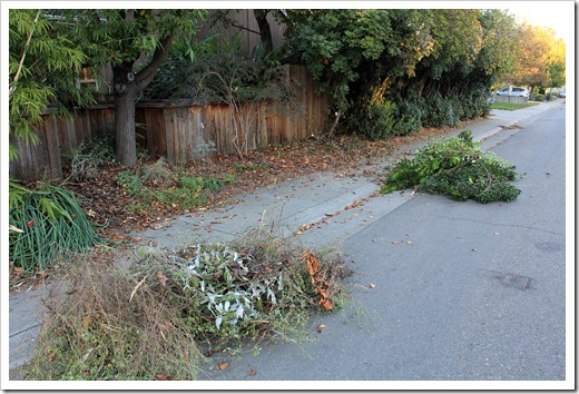 121104_yardwaste2