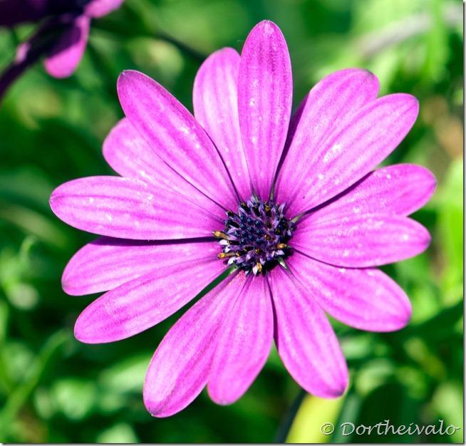 blomsterhoved