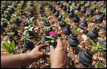 Dai lacrimogeni nascono fiori.. (7)