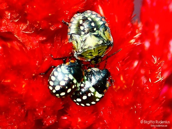 blom_20110921_bagge1a