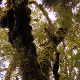 The Colors of the Sub-Tropical Rainforest - Karamea, New Zealand
