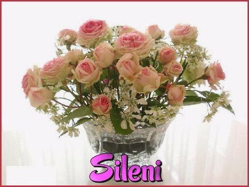 Sileni rosas