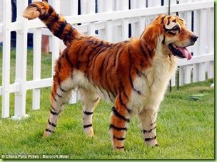 fake_tiger_dog_2