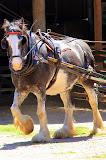A Beautiful Horse At Churchill Farm - Phillip Island, Australia