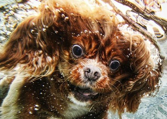 Underwater Dog  03