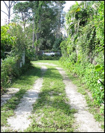 06-08 jungle18