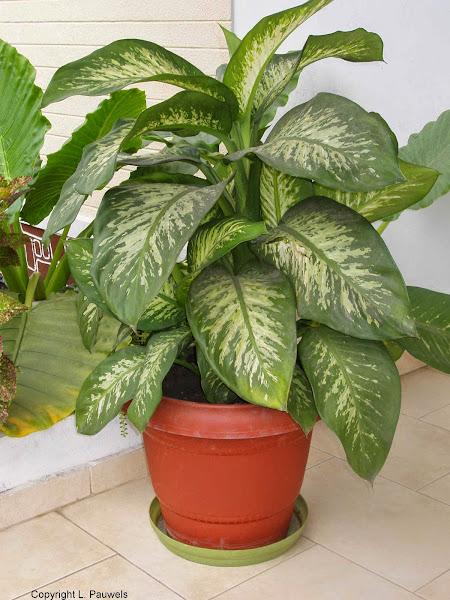 Tropical House Plants 100 Tropical House Plants