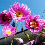 angkorsite_flower_1 (123).jpg