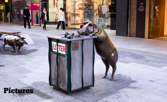 pigs-adelaide-picture-by-jacky