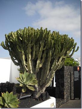 Lanzarote mare 457