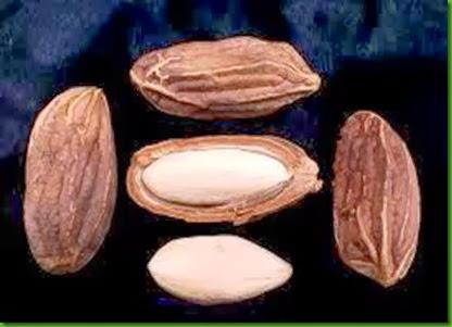 Paradise Nut