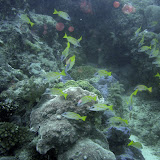 2006-04-16 Ribbon Reef 9